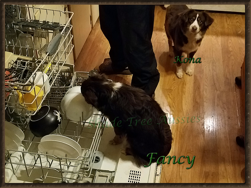 Fancy is such a help around the house. She loves pre-washing dishes.